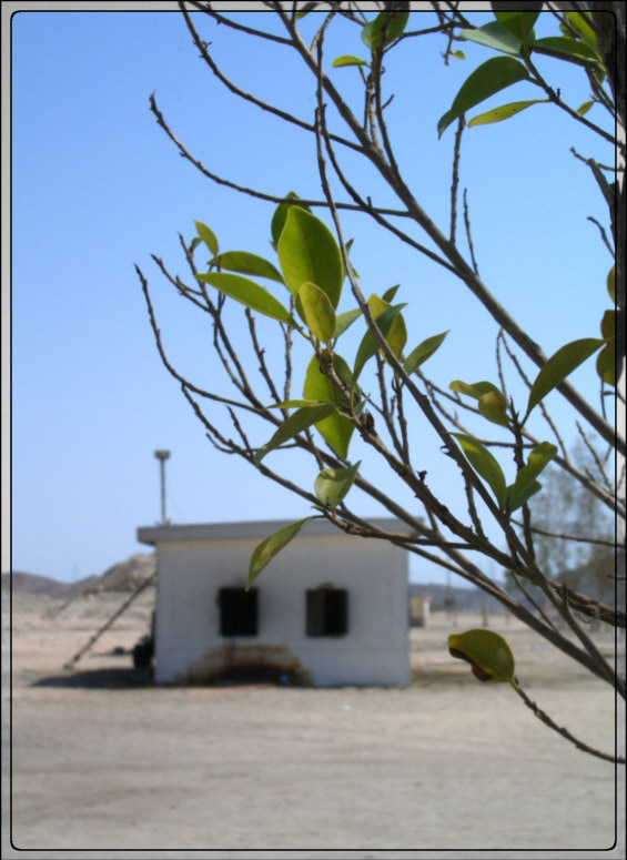 green spark in the desert