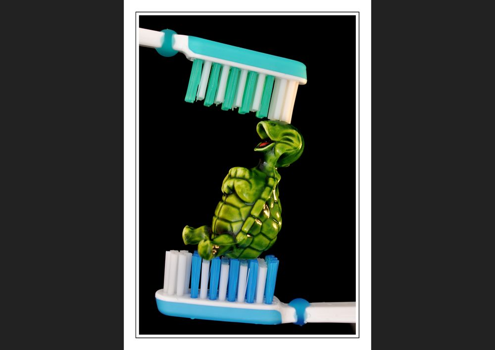 Green Turtle-Waschanlage *