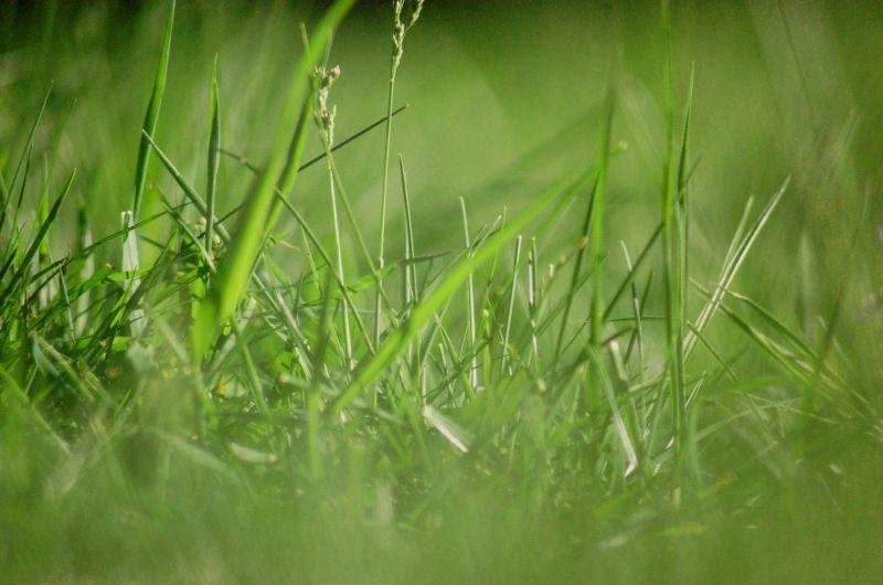 GreenGras