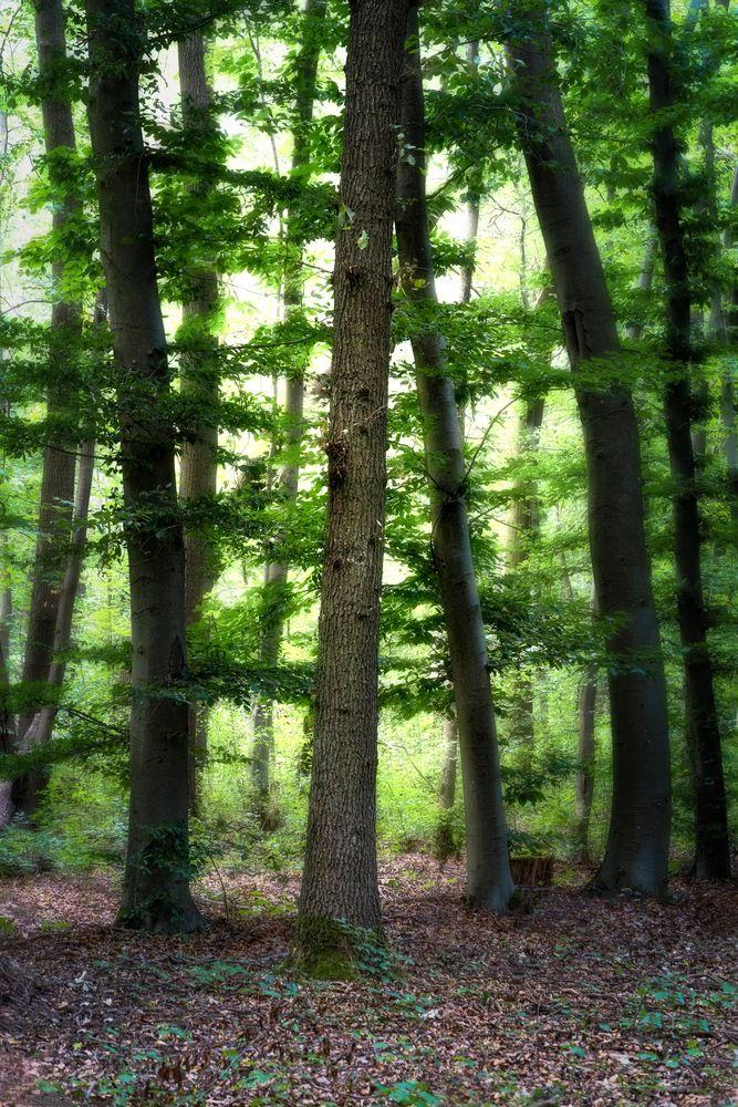 Green:Wood
