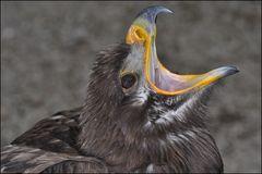 Greifvogel I