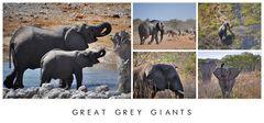Grey giants