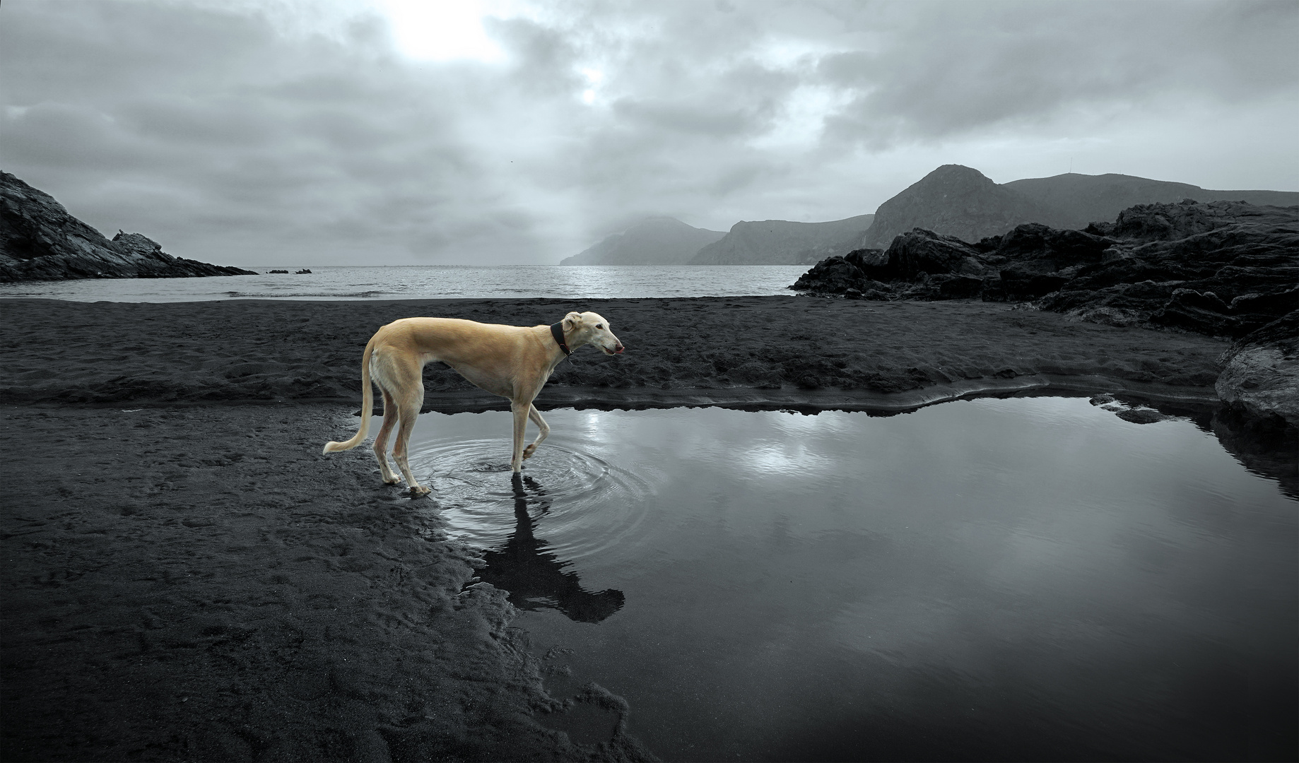 """Greyhound in gray"""