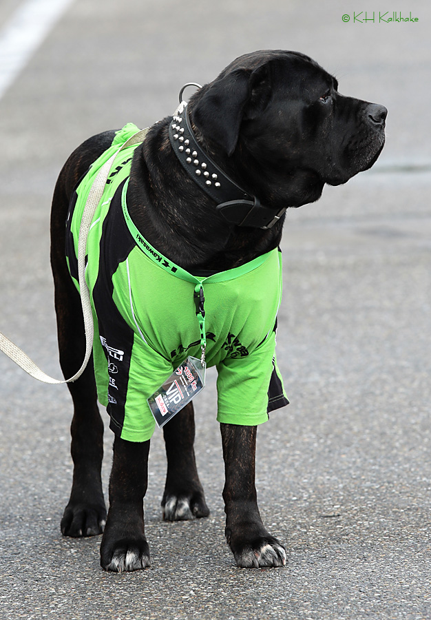 Grid Girl - VIP oder doch nur´n Hund ?