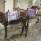 Griechische Taxis