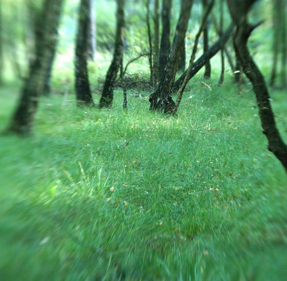 Grimberger Moor