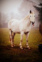 Grinse Pferd