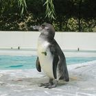 Grinse-Pinguin