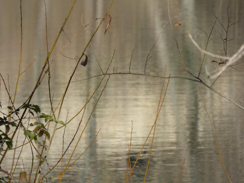 """Grises en el río (Serie """"El lienzo...el agua"""")"""