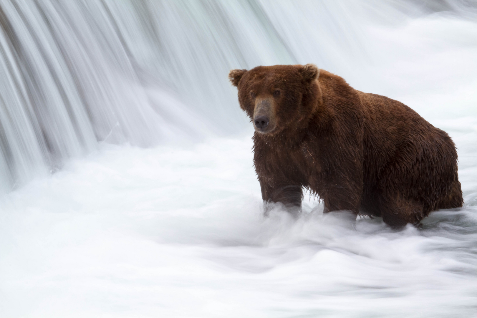 Grizzly V