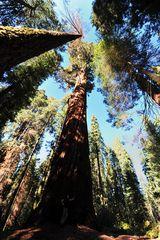 Größenvergleich im Sequoia NP
