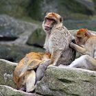grooming...