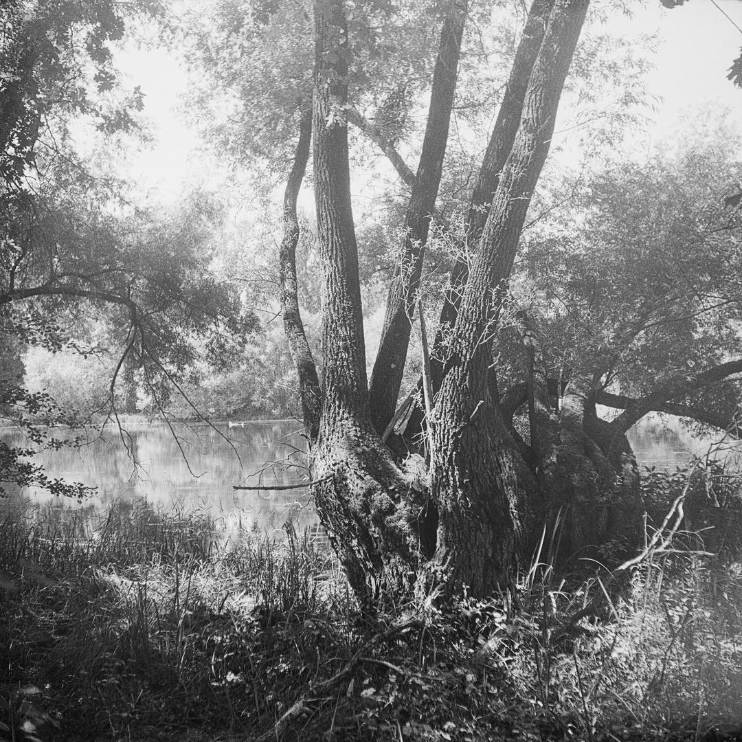 Groschenwasser-Weiden