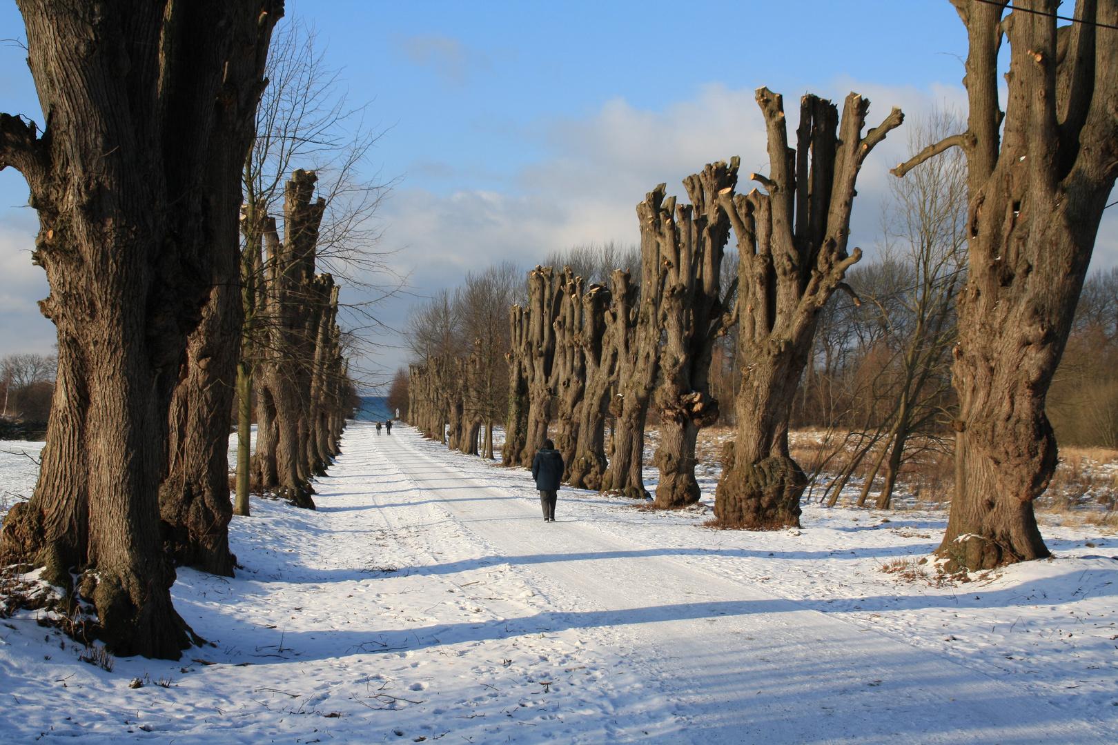 Groß Schwaansee, Winterspaziergang , Träume und suche Deine Lieblingsweide