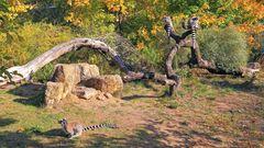 Großartig finde ich die Kattahalbinsel im Dresdner Zoo...