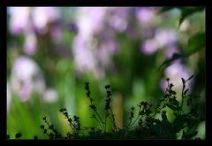 Große Blumen - kleine Blumen