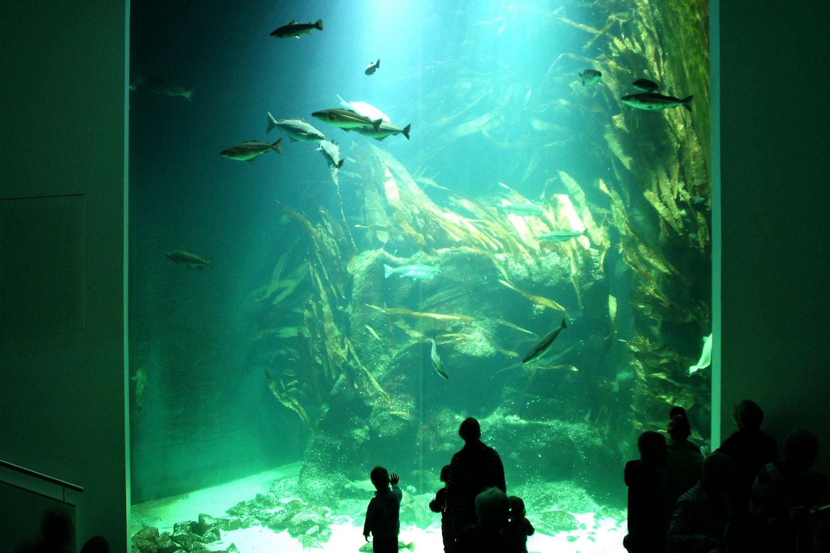 Große Fische, kleine Fische