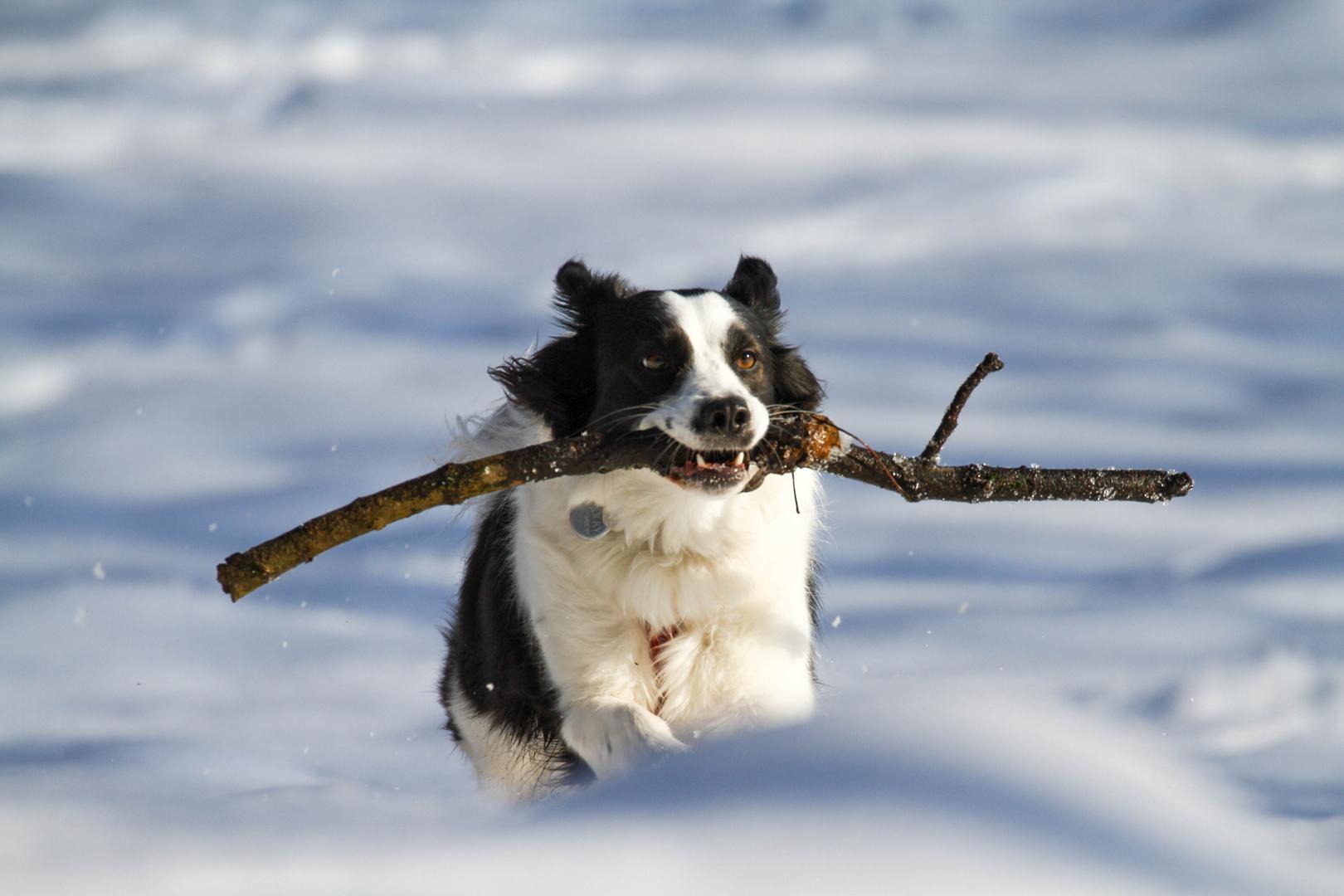 Große Freude im Schnee