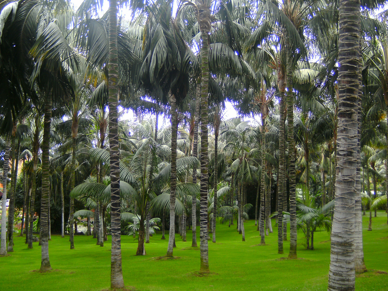 große und kleine Palmen