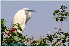 Große Vögel in Freiheit ....