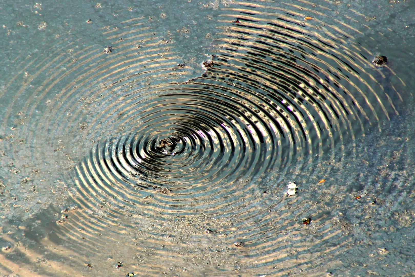 Große Wellen - erzeugt von ein kleinen Wasserläufer