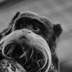 großer Bart