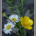 Großer Blumenstrauß in kleinen Händchen !