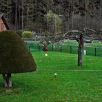 Großer Eierbaum