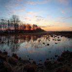 Grosses Moor morgens   -Pano-
