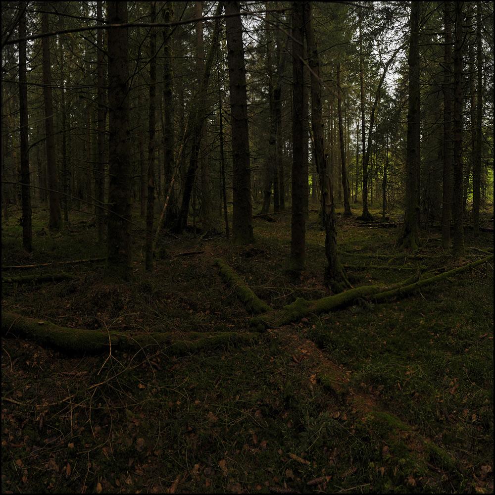 grosses Waldbild