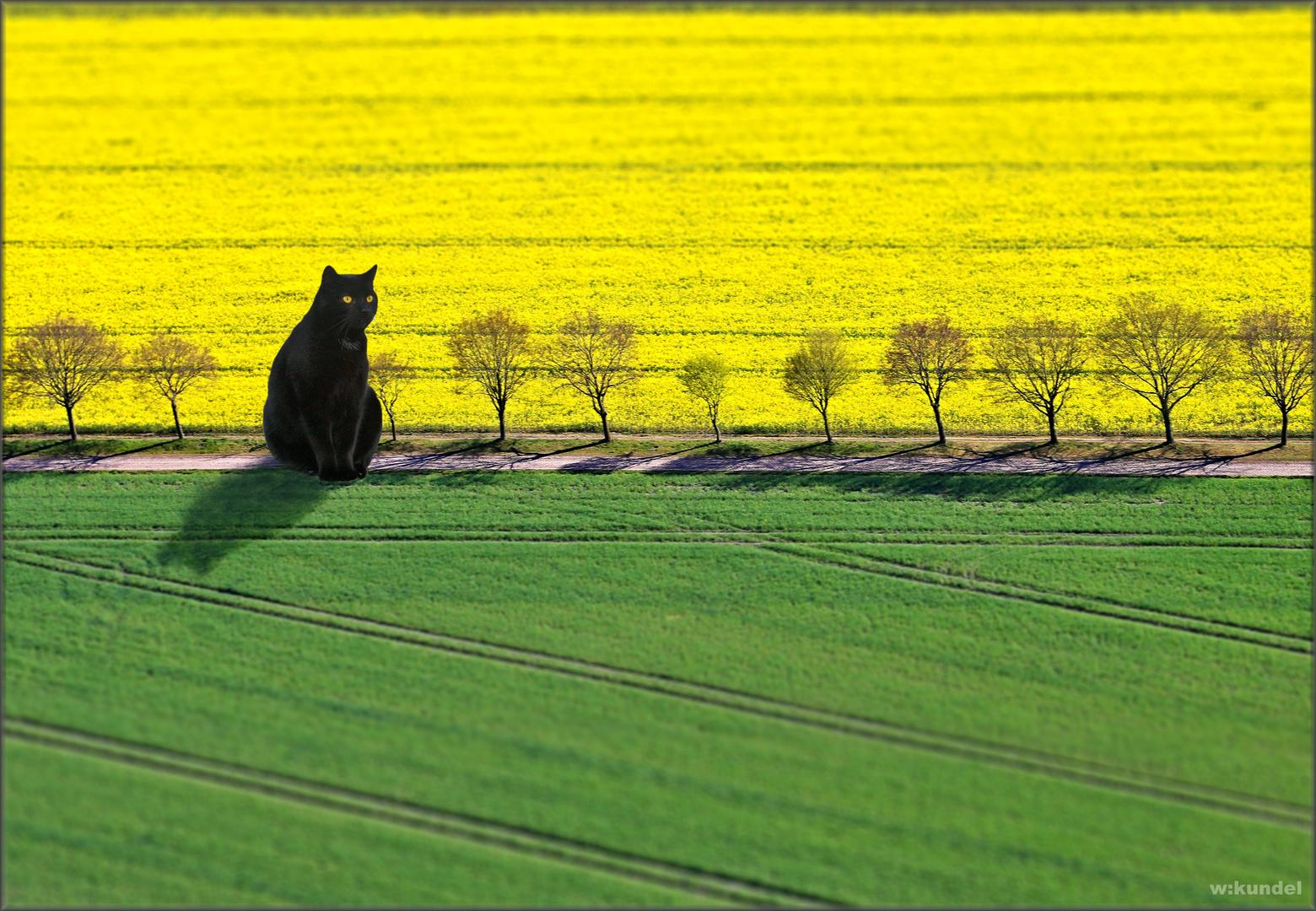 Großkatzenfotografie