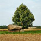 Großsteingrab im Feld