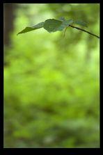 - grün -