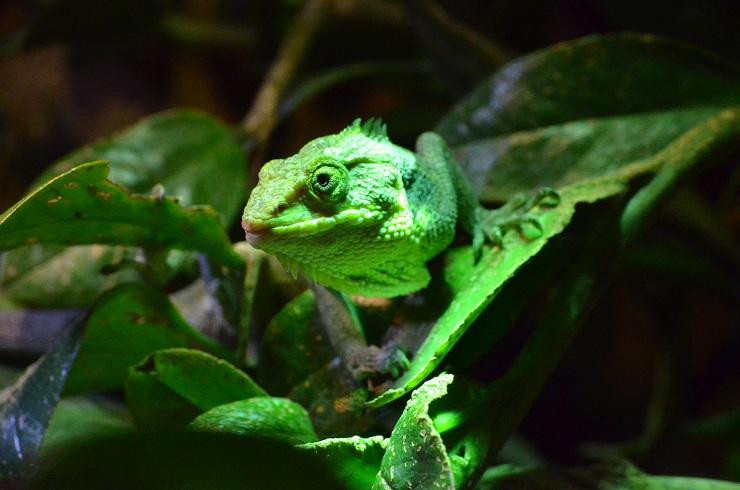 grün ;)