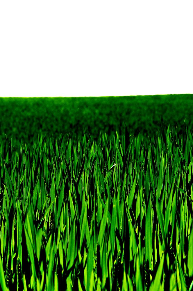 grün......