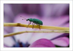 Grün auf Pink...