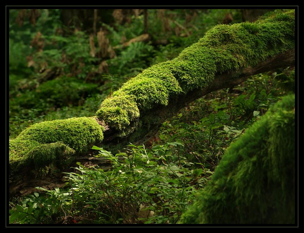 Grün - Farbe der Hoffnung I...