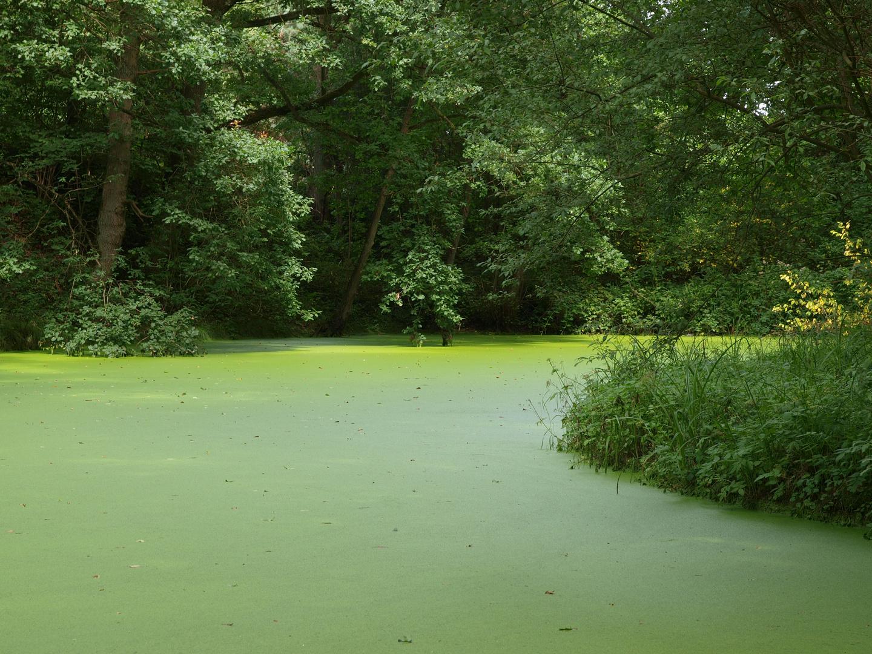 Grün Grün Grün Sind Alle Meine Farben