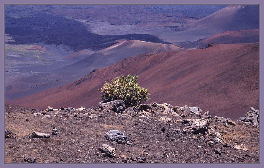 Grün im Haleakala Krater au8f Maui
