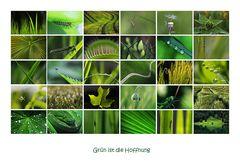grün ist die Hoffnung