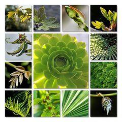 Grün ist Leben