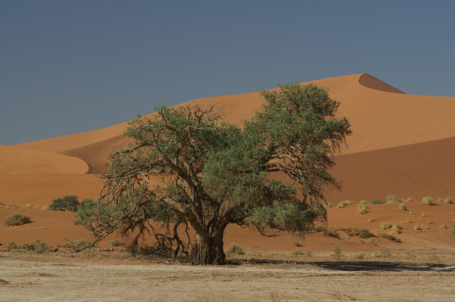 Grün mitten in der Wüste 1