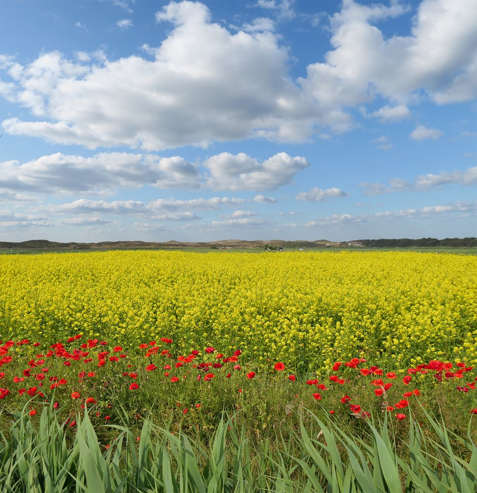 grün-rot-gelb-blau auf Texel