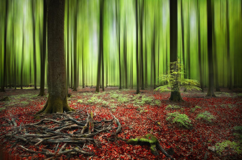 Grün - Rot - Wald