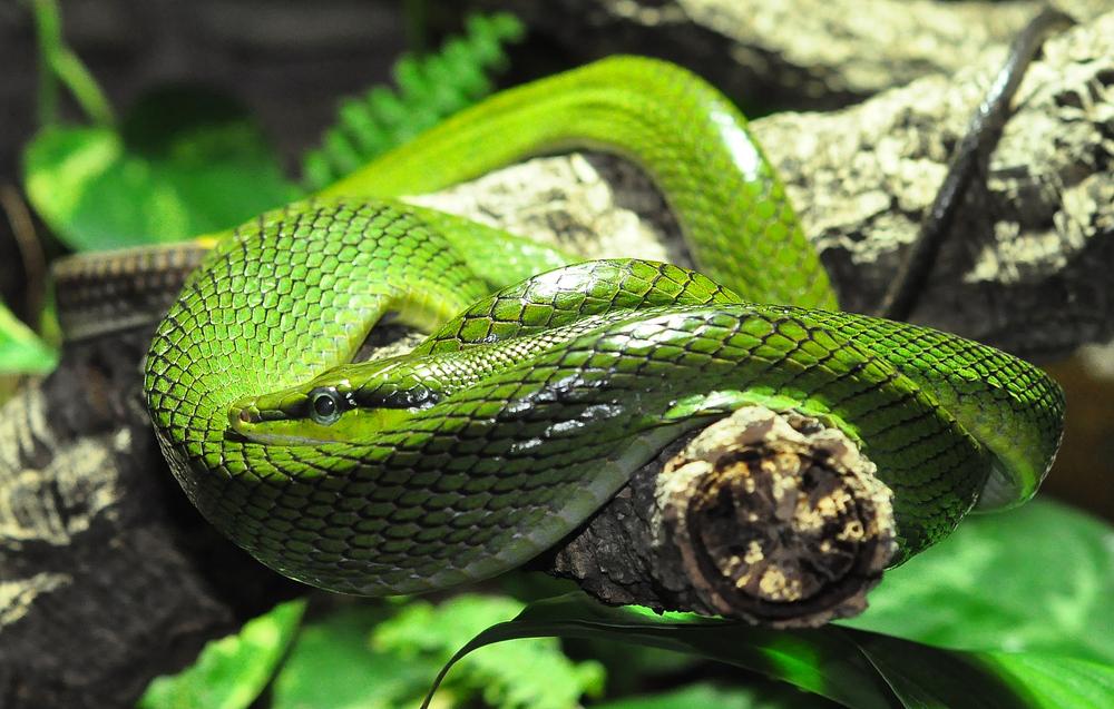 Grün schnell und tödlich ..........