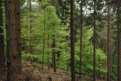 Grün sind schon die Wälder