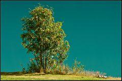 grün-türkis mit roten punkten