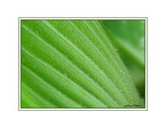 Grün und haarig