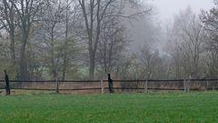 Grün vs. Grau - Herbstliche Nebelstimmung Ende November im Münsterland.