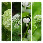 Grün-Weiß